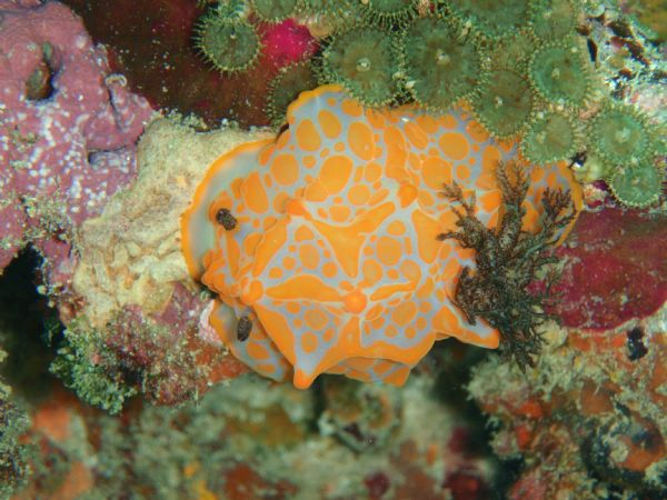 Colours of the Reef Polmaise Reef, Gladstone, QLD