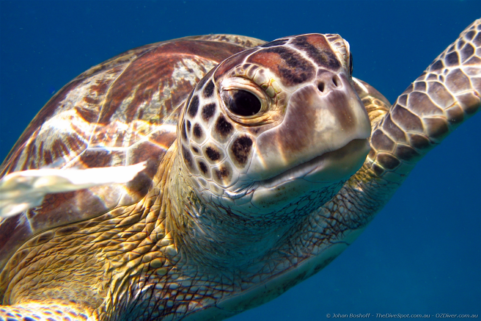 Green Turtle Tailand