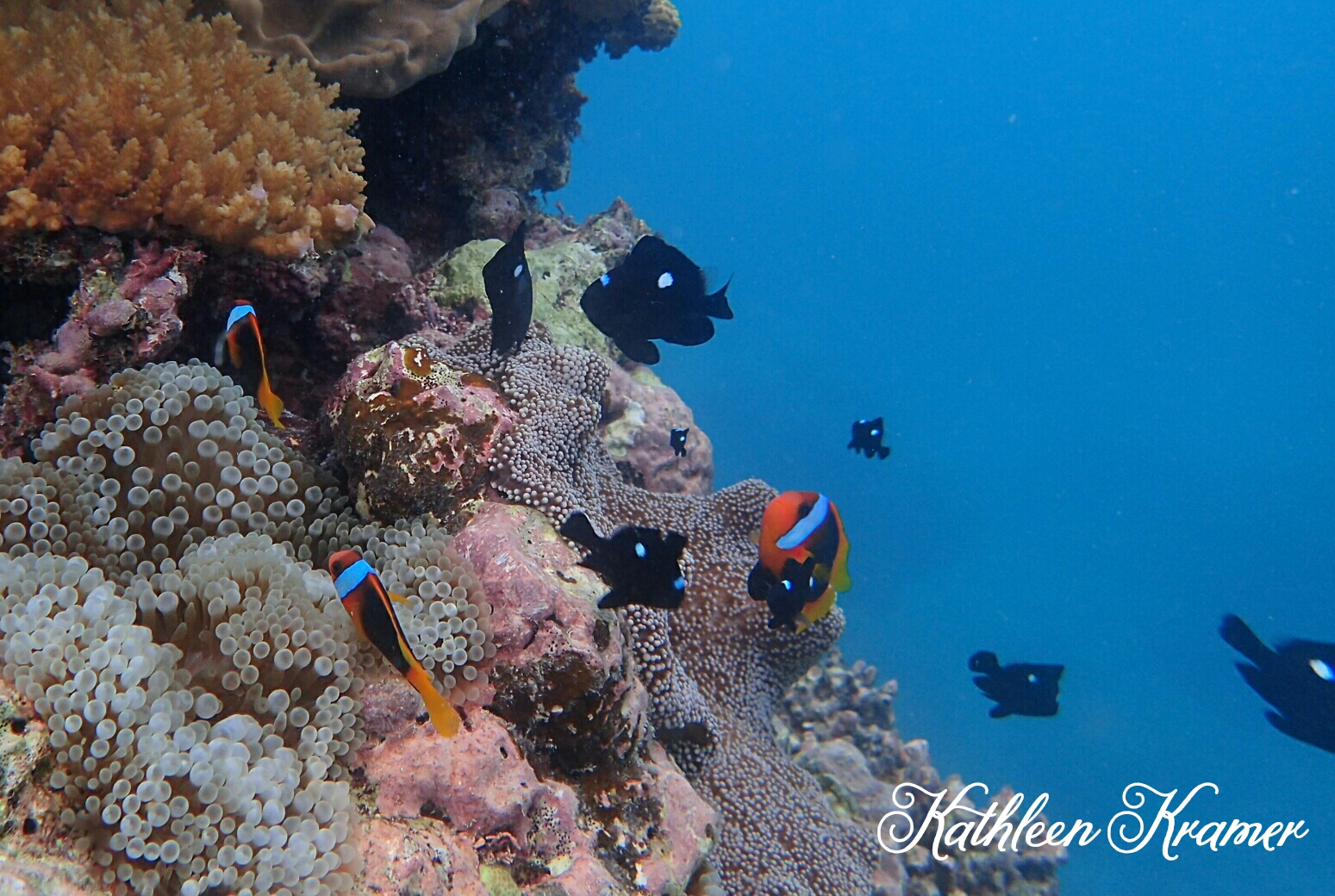 Freedom Adelaide Reef FNQld