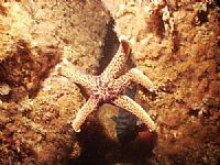 Starfish Rock Climbing